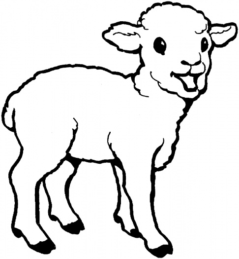 Lamb Drawing Outline 2011 january · sheep coloring