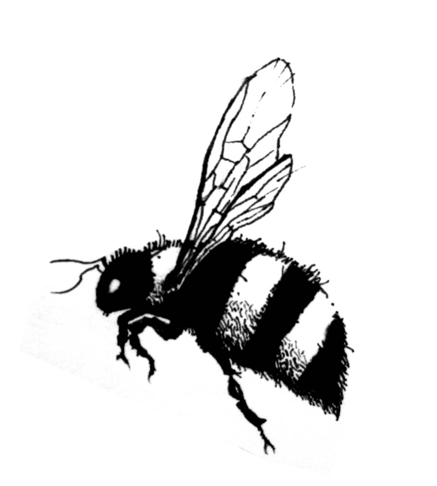 Line Drawing Bee : Drawings daily jess bee tattoo clipart best