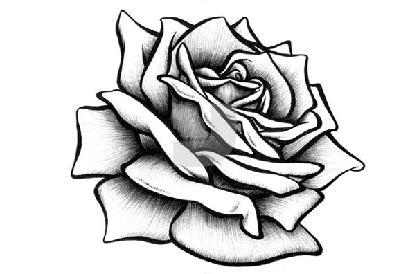 Rose Drawings - ClipArt Best