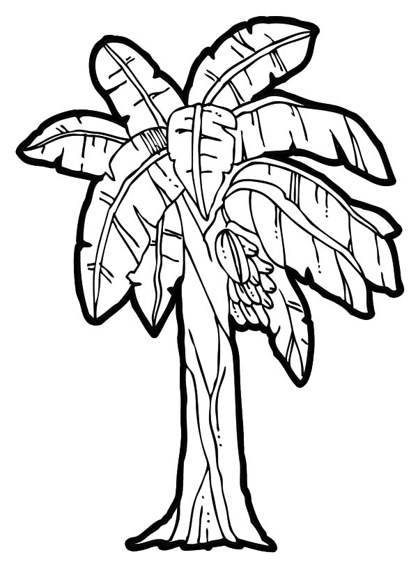 Banana Tree Coloring Clipart Best