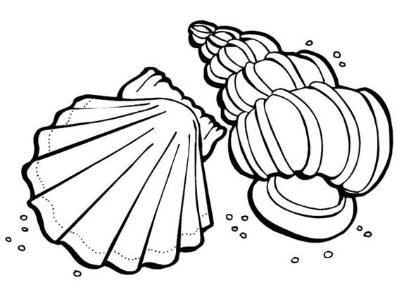 Beach Shells Coloring Pages - Coloring Home | 415x564