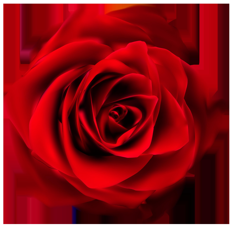 Clip Art Red Rose Clip Art red rose clipart best clip art tumundografico