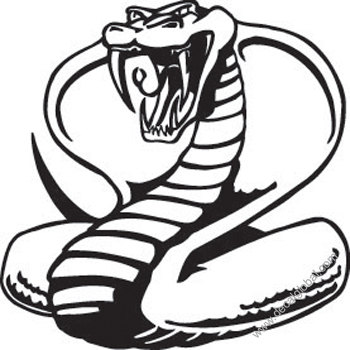 King cobra fangs