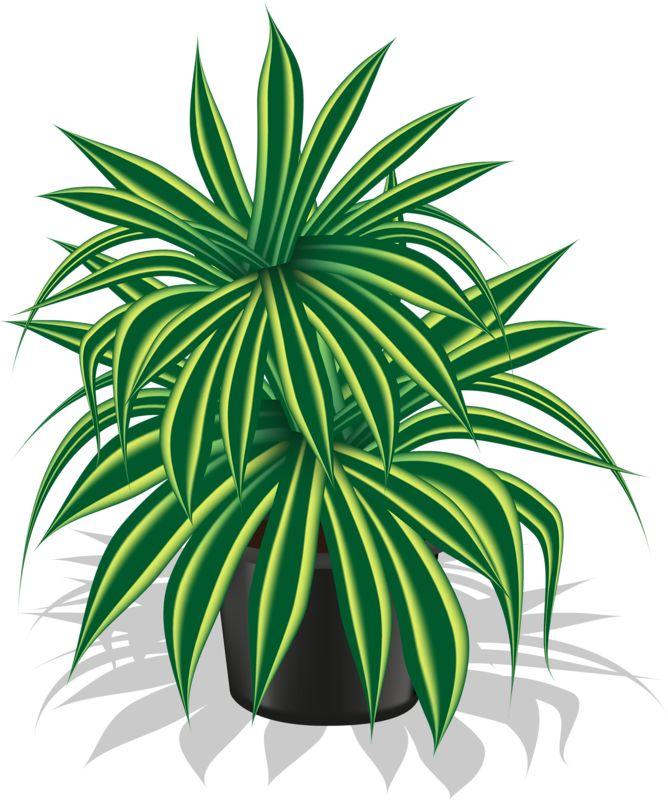 clipart of plants - photo #48