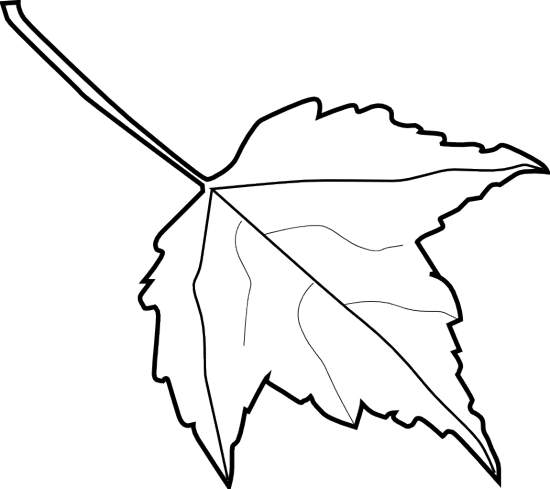 leaf black and white outline - photo #6