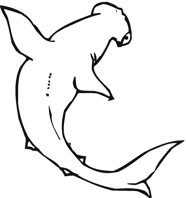 It is a graphic of Delicate Printable Shark Template