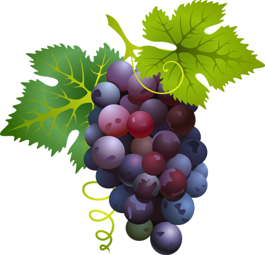 Grapes - ClipArt Best