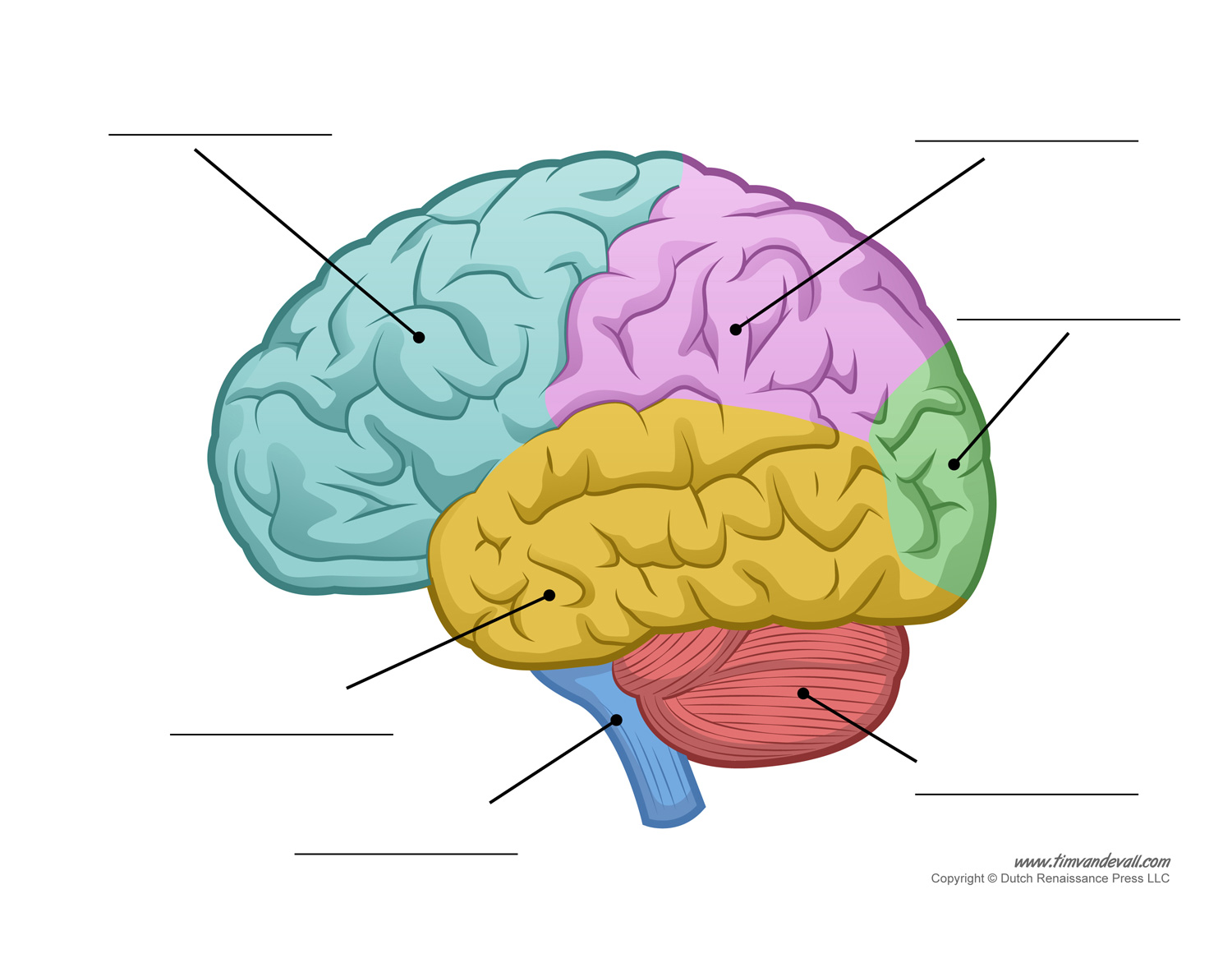 Fill In The Blank Brain Diagram - ClipArt Best