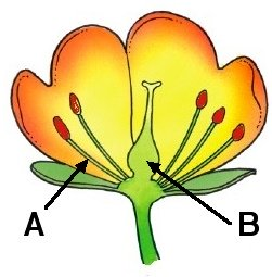 Science - Biology - Plant Reproduction - ClipArt Best ...