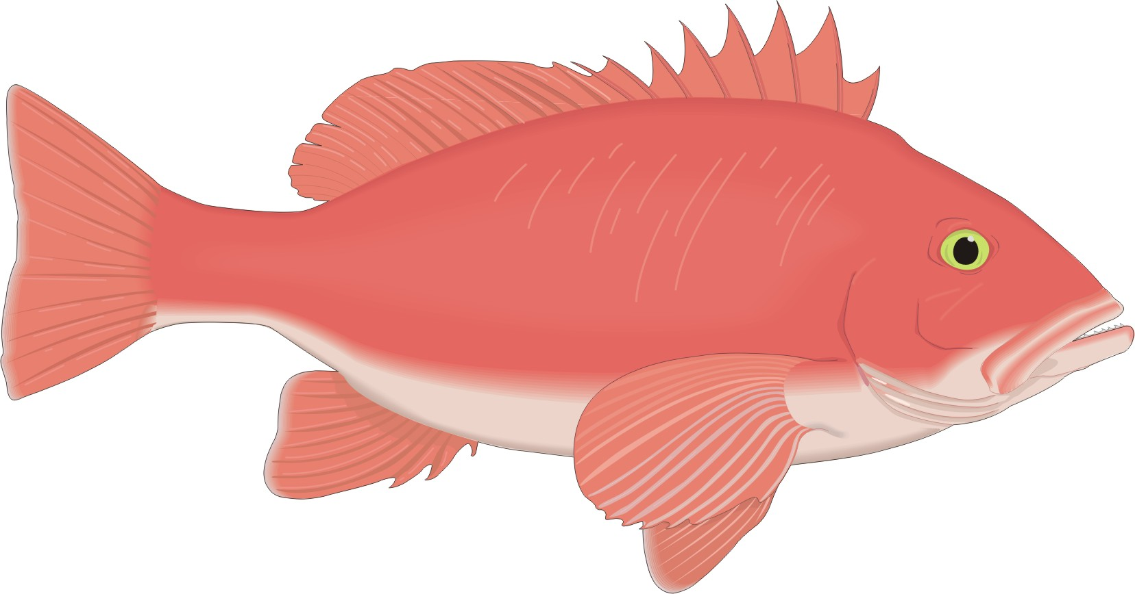 Red Fish Cartoon Clipart Best
