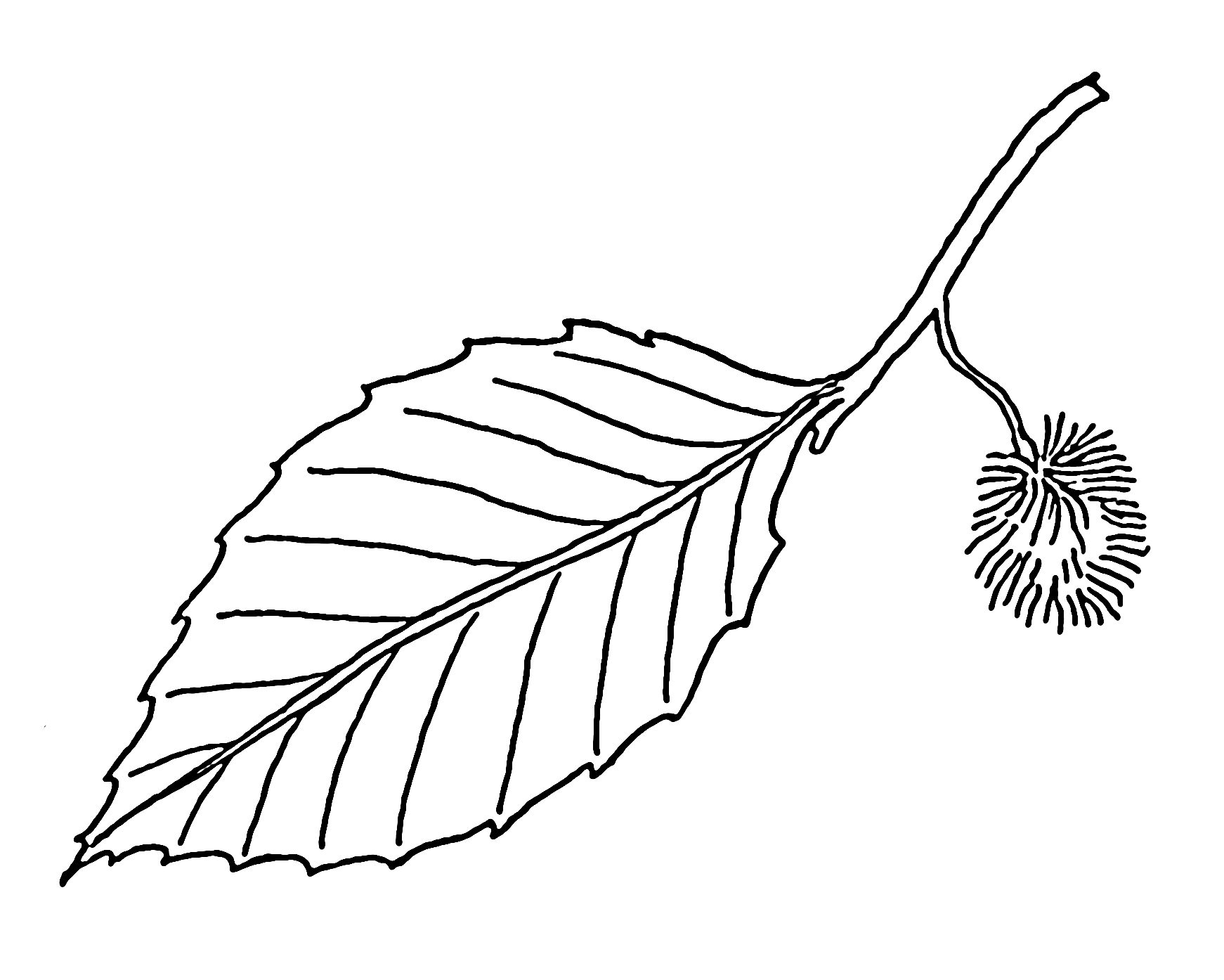 Leaves Drawing - ClipArt Best