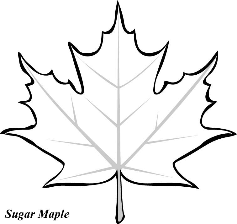 Maple leaf pattern printable clipart best for Leave coloring pages