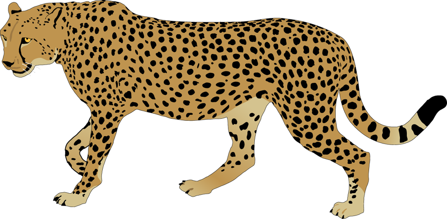Cheetah - ClipArt Best - ClipArt Best