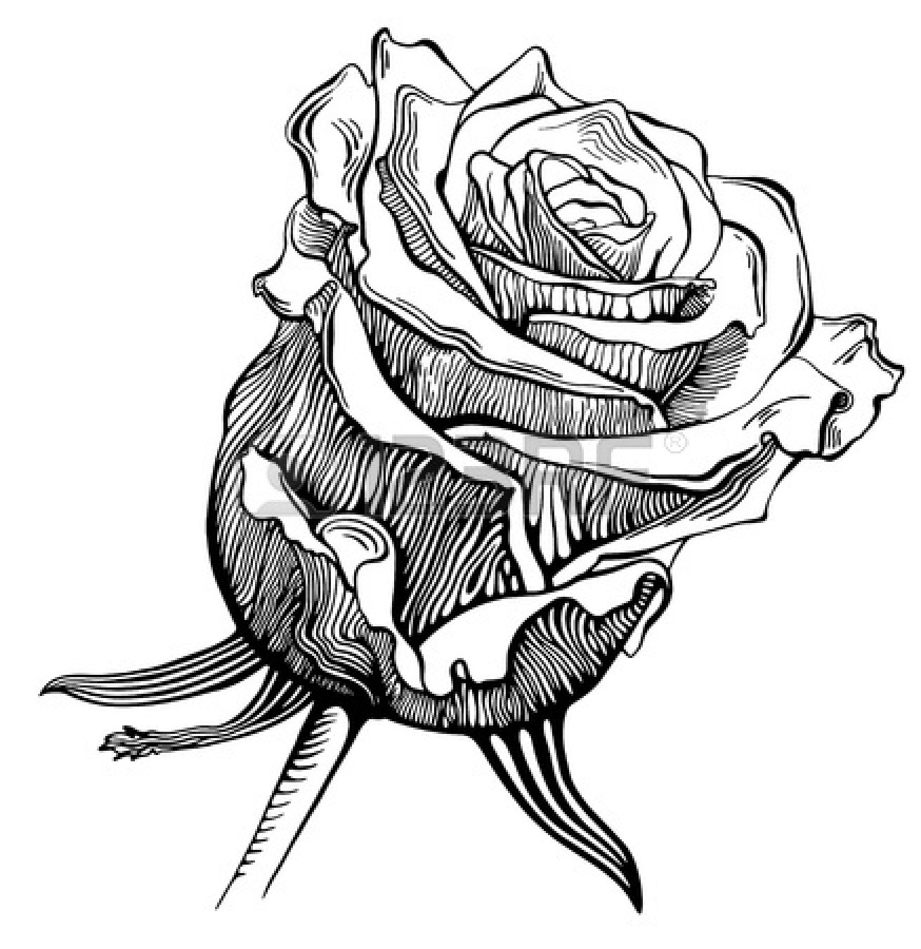 Black And White Drawing Of Rose - ClipArt Best