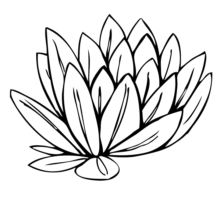 Water Lily Outline - ClipArt Best