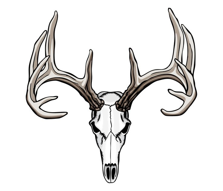 Amazoncom faux antlers
