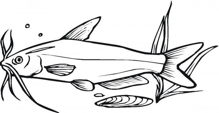 Catfish 8 coloring page Super
