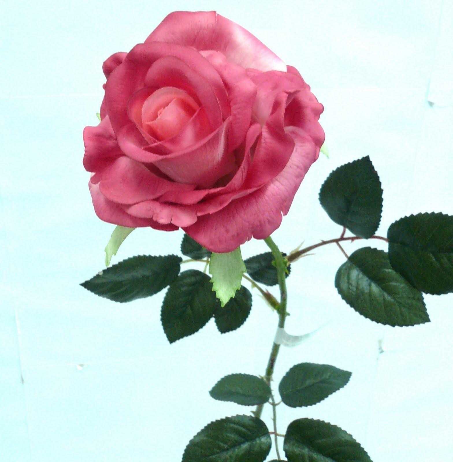 eleletsitz: Single Pink Rose Stem Images  eleletsitz: Sin...