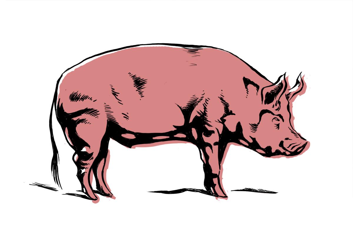 Pigs cartoon images clipart best - Pig wallpaper cartoon pig ...