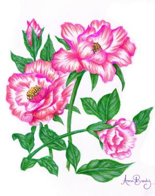 how to draw a pink flower