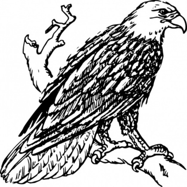 bald eagle perched on a branch download free vector bald eagle clip art printable bald eagle clip art black and white