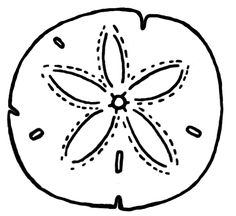 Clip Art Sand Dollar Clip Art sand dollar clip art clipart best free to use resource henna colors and doodle