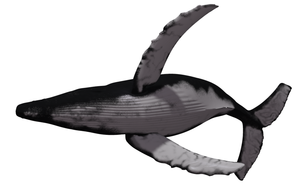 whale png clipart best