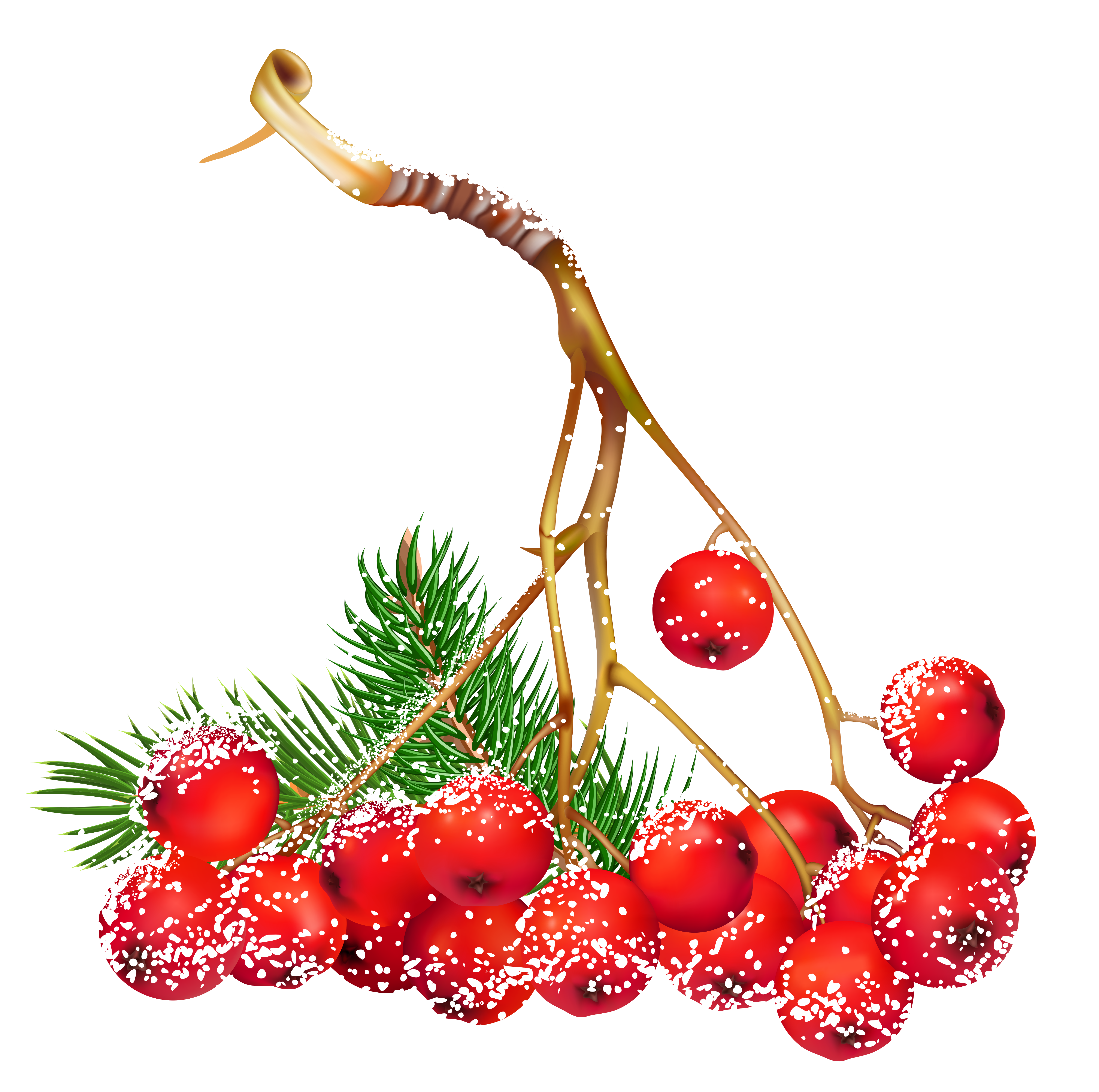 pictures of holly berries clipart best