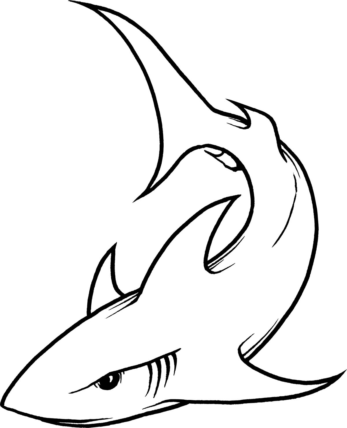 33 Shark Outline Drawing Free Cliparts That You Can Download To