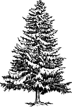 Free Vector Pine Trees - ClipArt Best