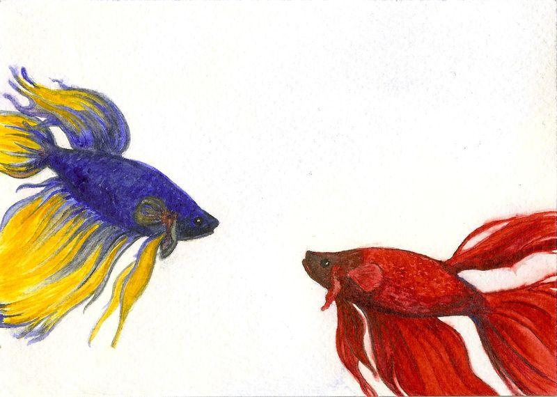 Fish sketches