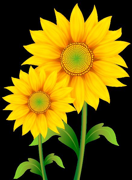 Sunflower Petal - ClipArt Best