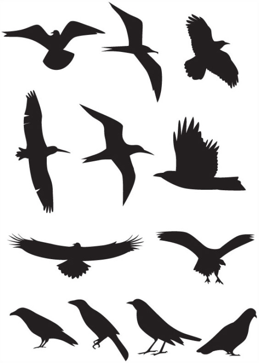 Best Photos of Flying Bird Silhouette Template - Bird Silhouettes ...