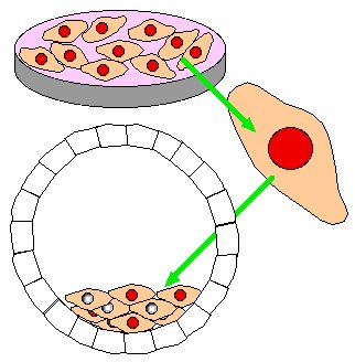 Animal Cell Diagram Unlabeled - ClipArt Best