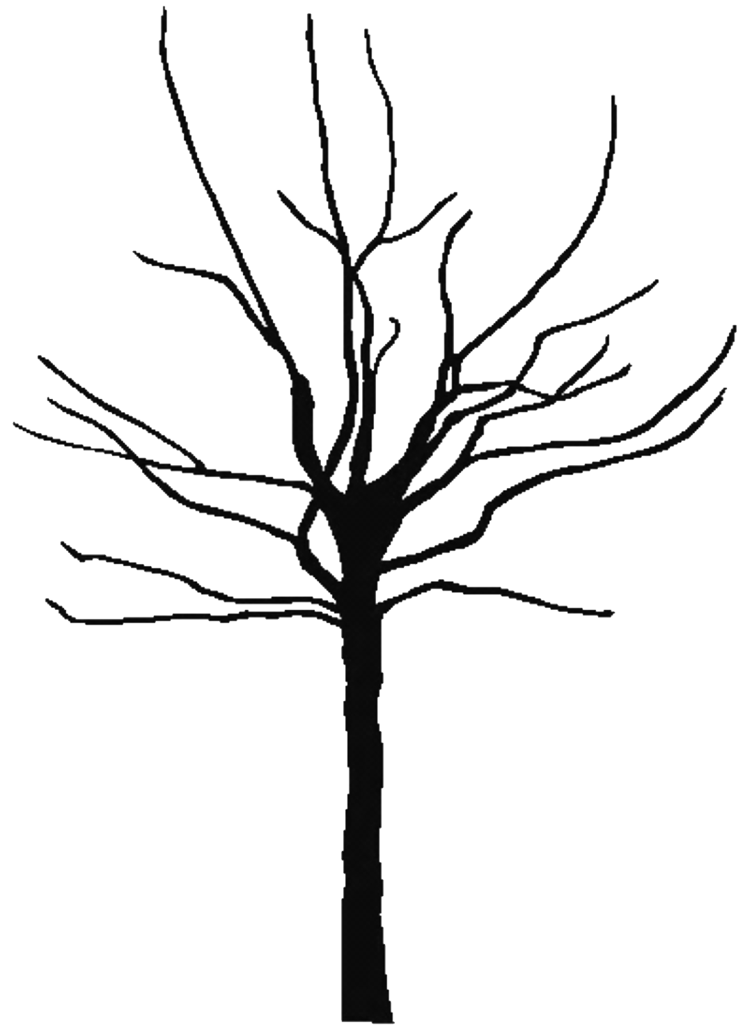 Leafless Tree Line Drawing Bare tree coloring page
