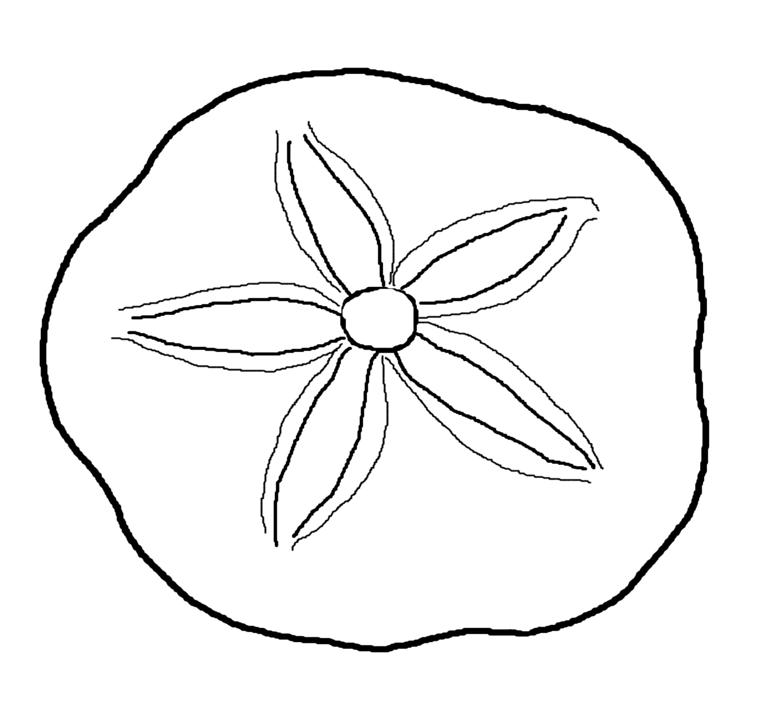 Sand Dollar Coloring Page - ClipArt Best