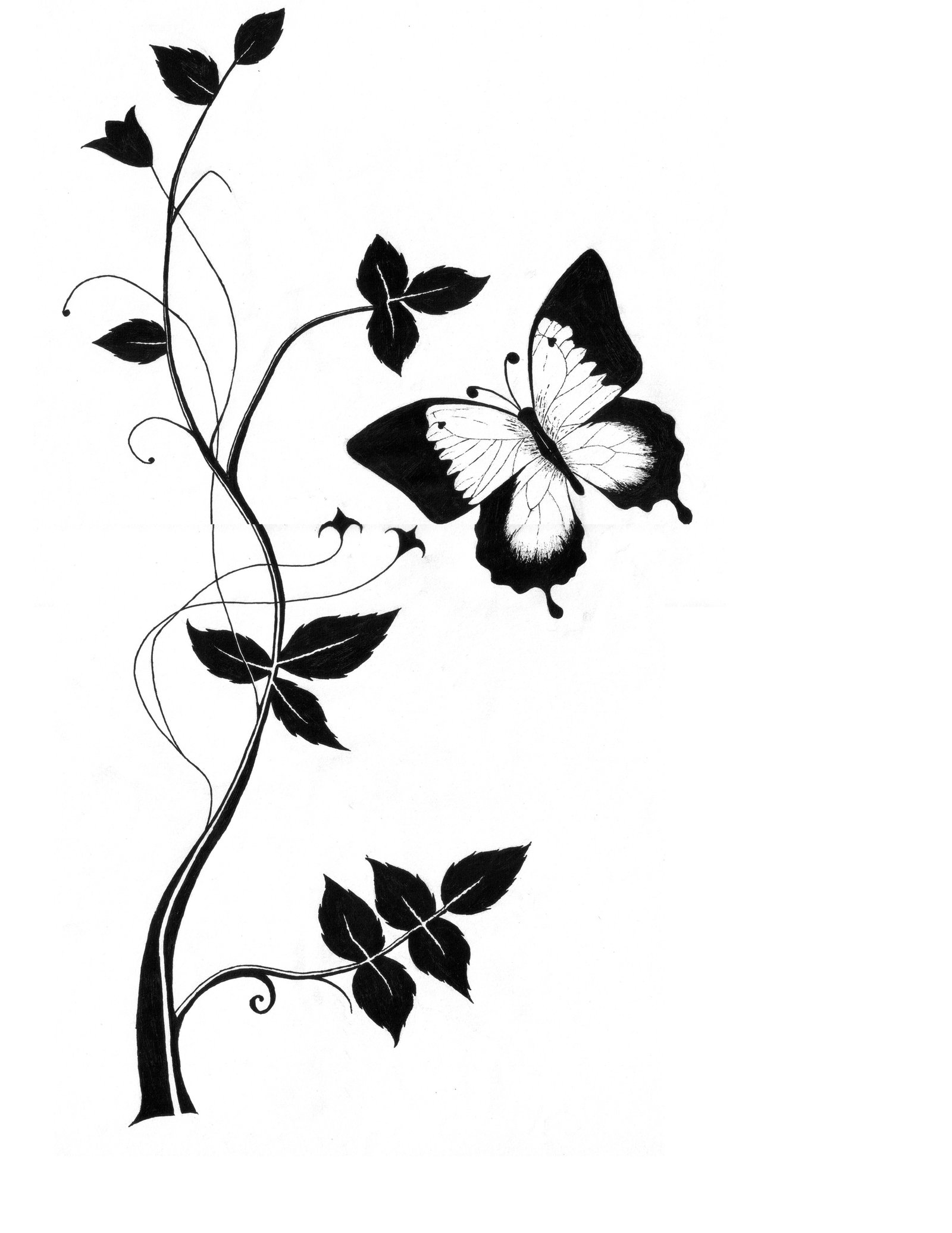 Butterfly wallpaper black and white clipart best for Line drawing wallpaper