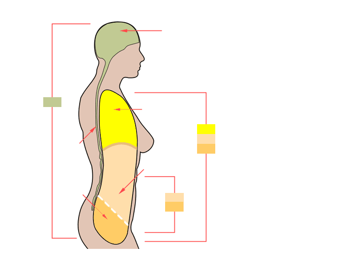 body cavities diagram clipart best. Black Bedroom Furniture Sets. Home Design Ideas