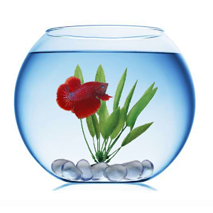 Betta fish clip art clipart best for Beta fish bowl