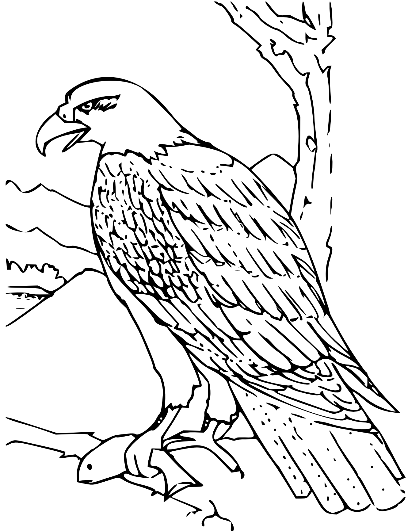 Line Art Using Photo : Eagle line drawings clipart best