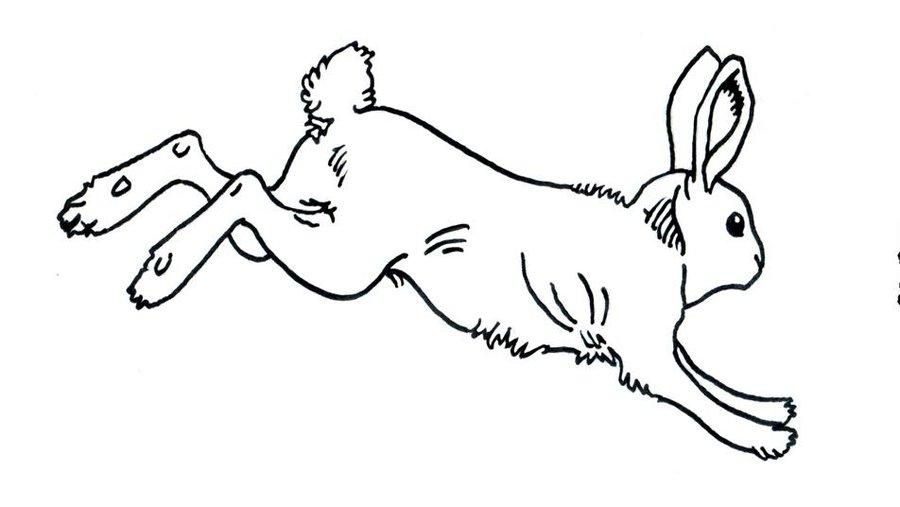 Line Art Bunny : Rabbit line drawing clipart best