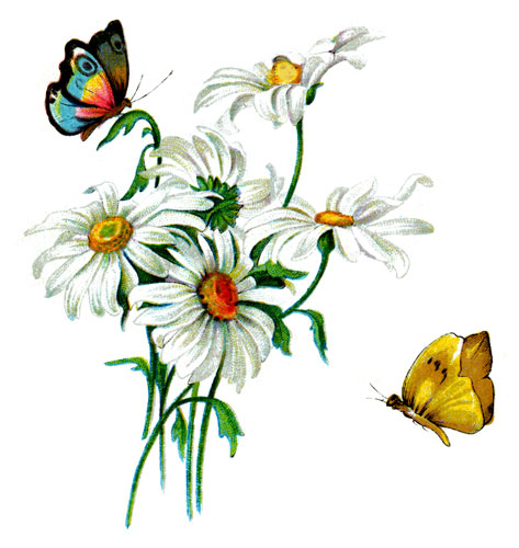 Butterflies On Flowers Drawings - ClipArt Best