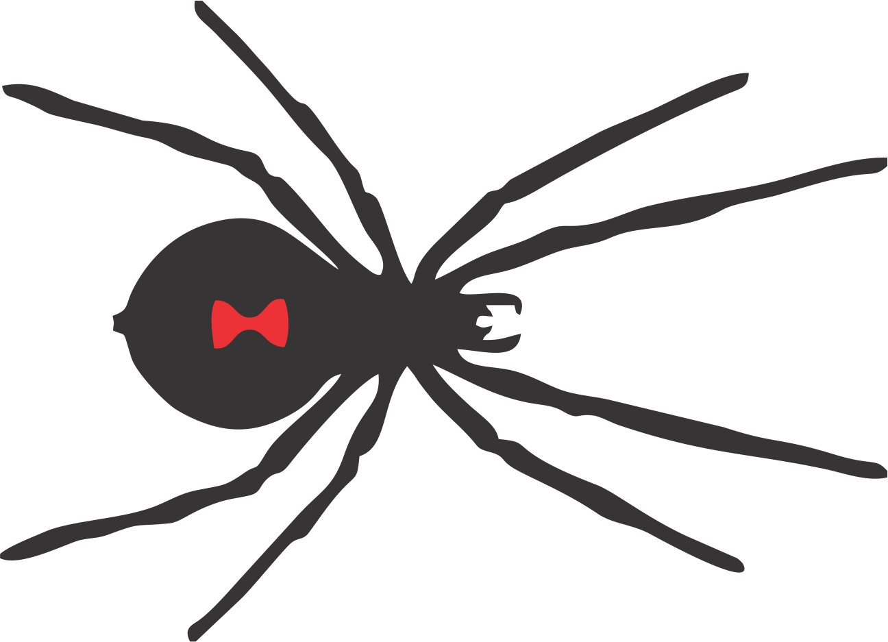 black widow spider silhouette -#main