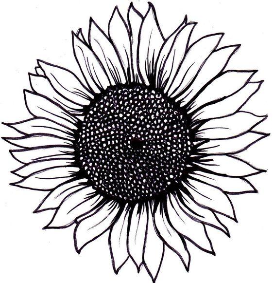 Line Art Sunflower : Sunflower outline clipart best