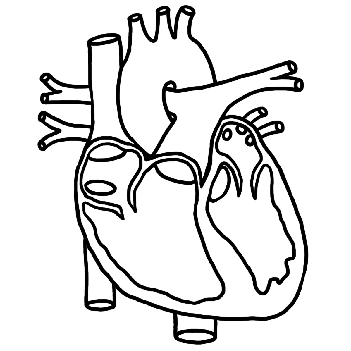 human heart diagram  kids clipart  clipart