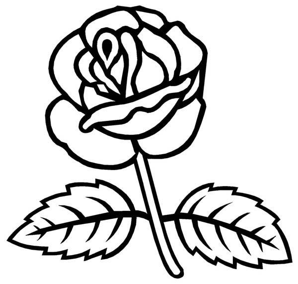 Drawing Of Rose Leaf