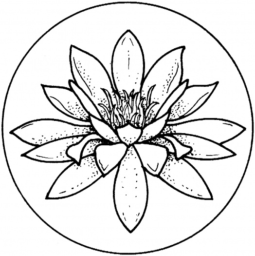 Water Lily coloring pages | Super Coloring - ClipArt Best ...