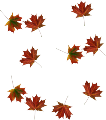 Falling Leaves Transparent Png - Free Icons and PNG Backgrounds