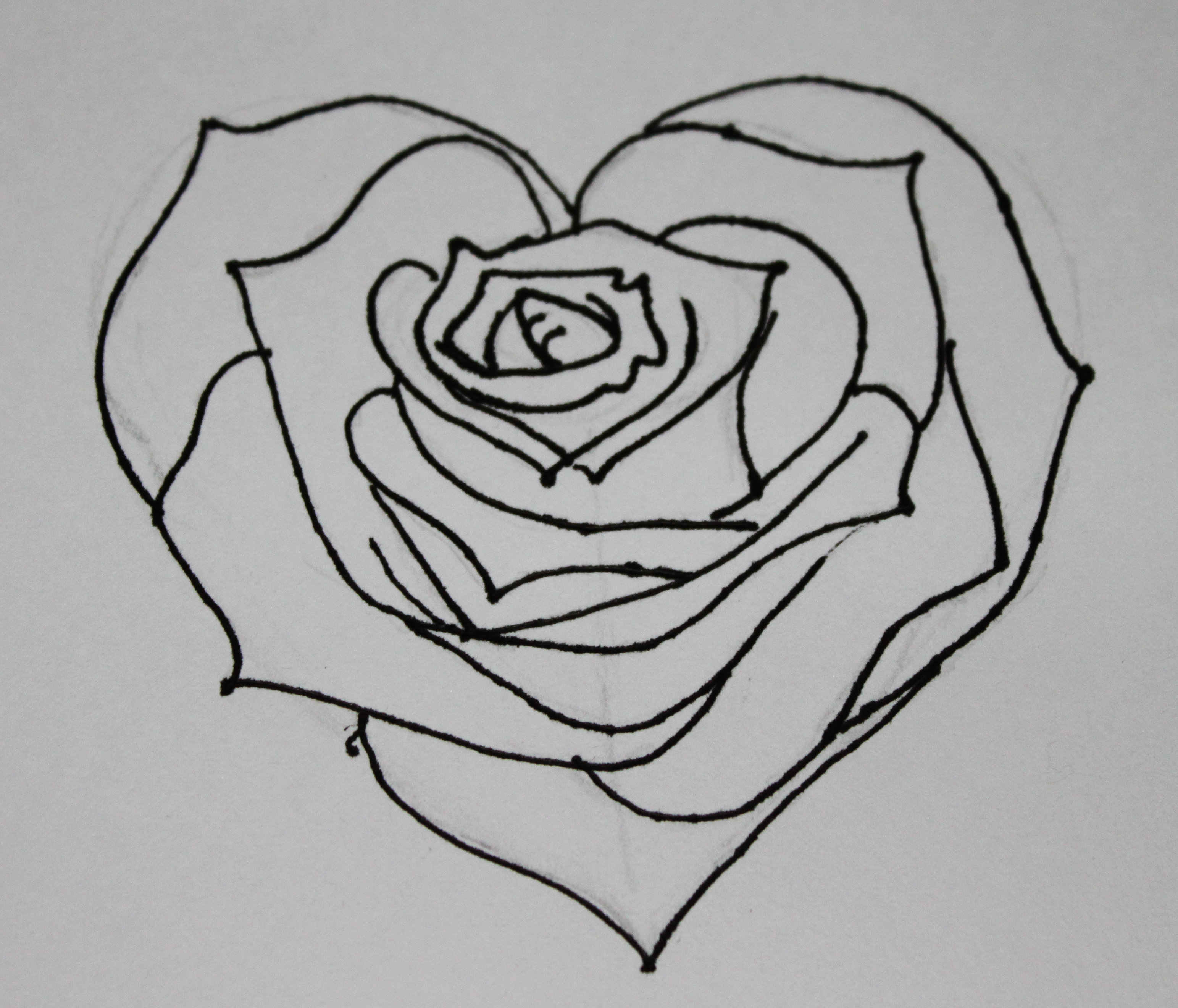 Pictures Of Roses Drawings Images amp Becuo