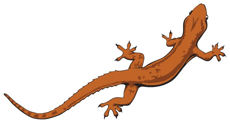 Lizard Drawings - ClipArt Best
